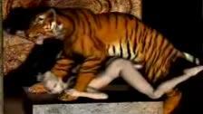 Miel... Je te ai toujours dit que je follabas comme un tigre